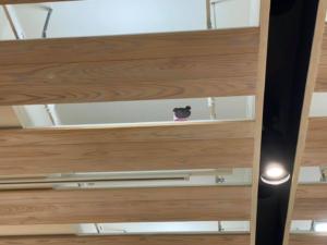 OPAM 2階にて 夏のワークショップ「動物王国~天井裏は夢の国」